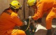 Bombeiros resgatam cão de bueiro em Maceió