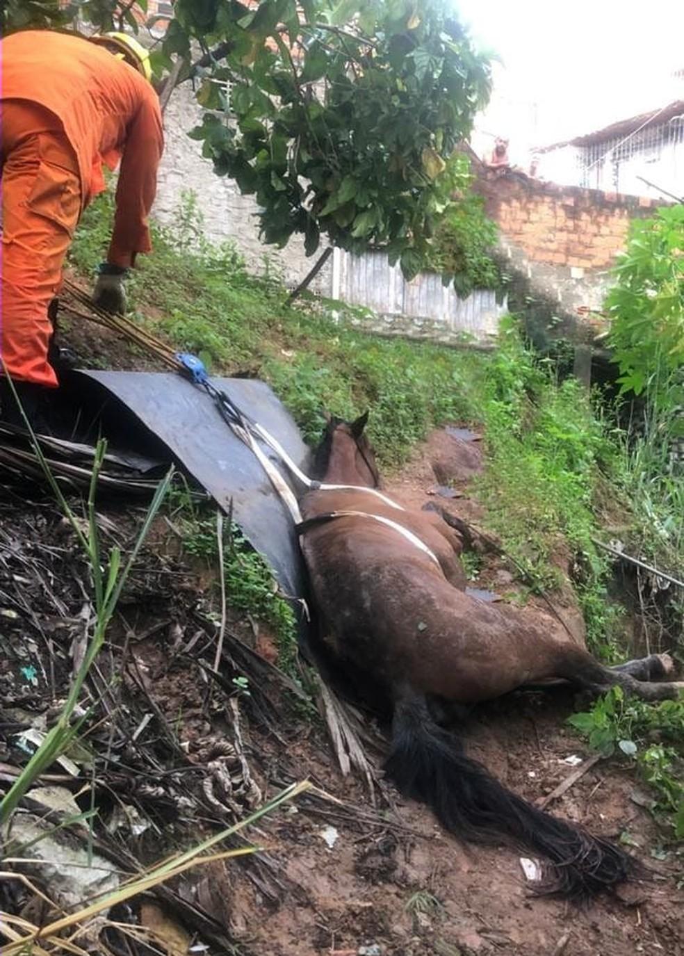 Bombeiros resgatam cavalo que caiu dentro de vala em Maceió