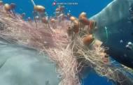 Mergulhadores libertam baleia que estava presa em rede de pesca na Itália
