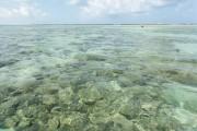 ICMBio autoriza reabertura da Costa dos Corais para visitação pública, em Pernambuco e Alagoas