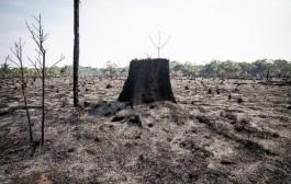 Focos de queimadas em Rondônia recuam quase 40% nos últimos 4 anos, aponta Inpe