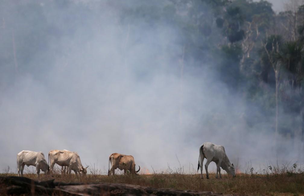 Incêndios na Amazônia aumentaram 28% em julho em comparação ao ano passado, mostram dados do Inpe