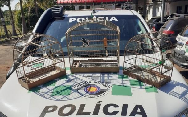 Fiscalização apreende aves silvestres mantidas irregularmente em cativeiro em residências em Presidente Prudente