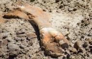 Esqueleto de dinossauro raro é encontrado por garoto de 12 anos