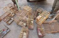 IMA flagra empreendimentos ilegais em reservas naturais no Litoral Norte de Alagoas