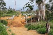 Governador de RO propõe alterar limites de reserva extrativista e parque estadual; Para ONGs, ação 'premia quem comete crime'