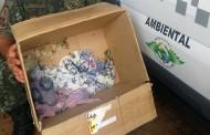 Filhotes de arara-canindé são abandonados em caixa de papelão no trevo de acesso a Teodoro Sampaio