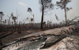 Número de alertas de desmatamento na Amazônia é 2º pior em 5 anos, apontam dados do Inpe